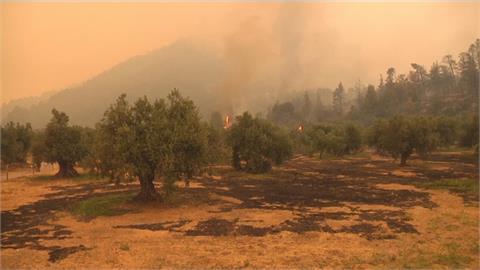 土耳其8天近200起森林野火 電廠危在旦夕 打火弟兄累到飆淚