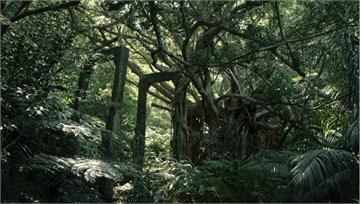 沖繩西表島隱藏的礦工悲歌 《綠色牢籠》揭開台灣移民的故事