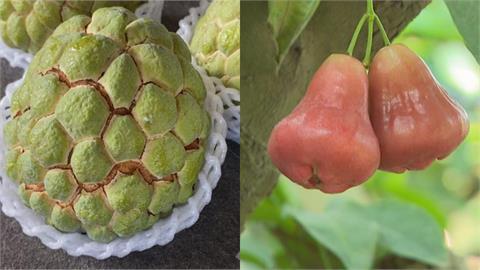 標準在哪?「驗出有害生物」禁台灣水果輸入 介殼蟲「寄主」高達66科