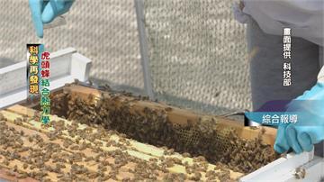 蜜蜂築巢藏細節 建築工法結合熱力學