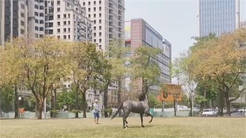 公園散步壓「馬」路! 台中七期公園驚見遛馬