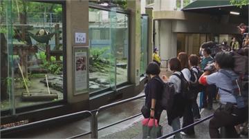 暌違4個月 上野動物園今重開.迪士尼7.1開