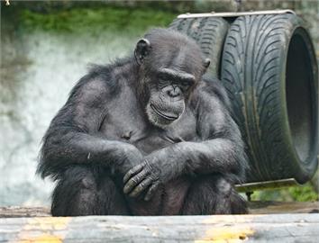 快新聞/休假77日後「牠們」要上班了! 台北市立動物園8/1重新開放