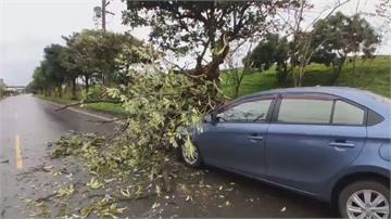 險被死神收了!婦才下車 下1秒…路樹砸中車
