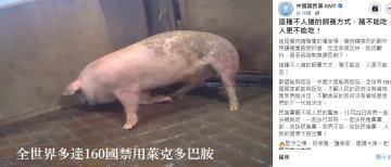 快新聞/藍營PO豬隻抽搐影片散布吃萊劑假消息 防檢局移請警方偵辦