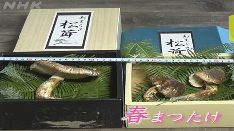 日本人瘋了... 3朵「這個」拍賣價 竟要台幣4萬多!