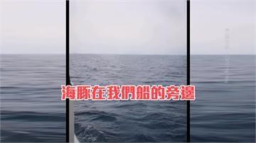 東琉線現彩蛋!大批海豚跳躍伴游 民眾驚呼連連