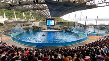 逾3千遊客湧入!花蓮海洋公園 人多到像逛夜市
