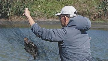 劣!濁水溪出海口非法架鳥網 保育鳥類、過冬候鳥全遭殃