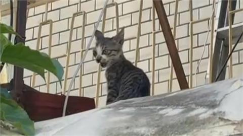 報案小偷卡陽台哀叫 警方趕到場只見隻小貓