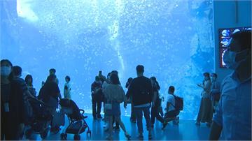 遭控水母斷肢 鯊魚自撞玻璃 Xpark出面澄清:絕無虐待