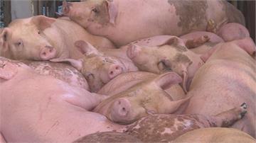 遭疑將開放全球萊豬 陳吉仲: 只有美國萊豬