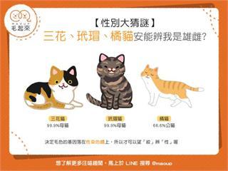 【性別猜一猜】三花vs.玳瑁vs.橘貓,安能辨我是雄雌?|寵物愛很大