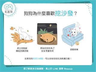 【狗狗行為學】狗狗老是喜歡挖沙發,難道是在找寶物嗎?|寵物愛很大