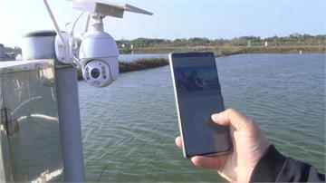 虱目魚凍死多 漁民5G科技助過冬