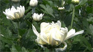 花卉需求回溫 價格上漲創20年同期新高
