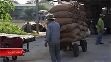 糧食留下來自己吃!泰國、越南限制農產出口 世界恐爆糧荒