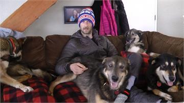 雪橇犬大賽驚傳虐狗?法國參賽者出面澄清