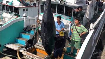黑鮪魚罕見大豐收 多種吃法「尚青」上桌