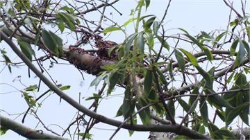 內湖親子活動惹到虎頭蜂 2大5小被螫傷送醫