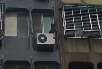 公寓當樹爬! 台灣獼猴大鬧台北市區