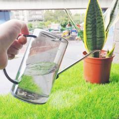 你會澆水嗎?學會這些基本觀念「觀葉植物」不再爛根、枯黃
