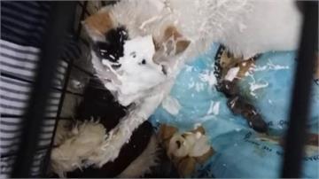 男子對貓咪撒咖哩粉、噴乳液 自PO影片遭網友肉搜