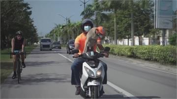 坐歐兜邁兜風超chill!菲律賓狗狗環島去
