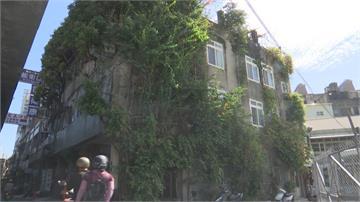 奇景! 人樹共生宅 百年榕樹貫穿2樓廁所