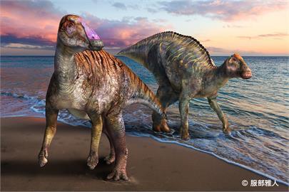 日本淡路島化石發現新品種恐龍 鴨嘴龍科同類