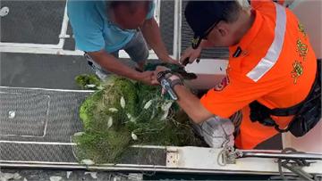 快新聞/玳瑁小幼龜遭廢棄漁網纏繞  岸巡、漁民齊力「救援」安置