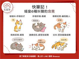 【貓貓行為學】貓奴快筆記!喵皇6種叫聲的含意|寵物愛很大