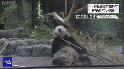 相隔4年再當媽!上野動物園大貓熊「欣欣」產下雙胞胎
