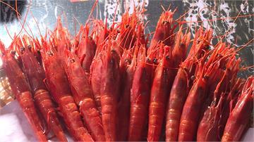 基隆胭脂蝦品質優 連鎖餐廳青睞指名要