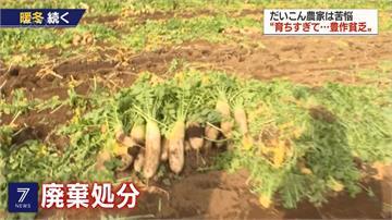 慘遇暖冬害農作 日本蔬菜價格暴跌