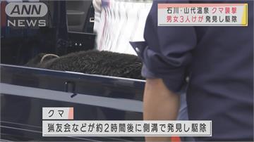 日本氣溫瞬間急降 傳出多起棕熊覓食傷人事件