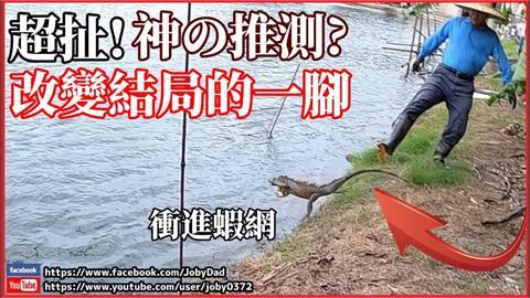鎮暴槍狙擊外來種!綠鬣蜥被射中遁入魚塭 結局神展開網笑:自投羅網
