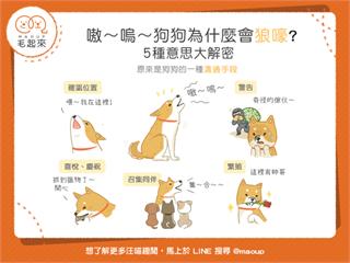 【狗狗行為學】嗷~嗚~狗狗為什麼會狼嚎?5種意思大解密! 寵物愛很大