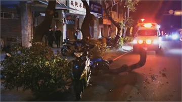 中市台灣大道行道樹斷落 兩騎士撞上受傷