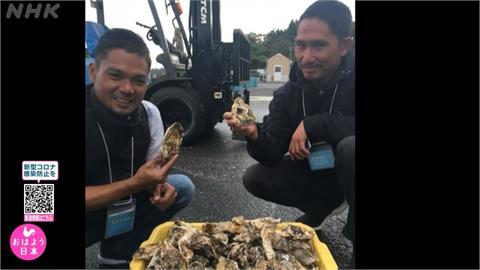 全球/震災重建尋謀生之路 日本傳授印尼漁民養牡蠣
