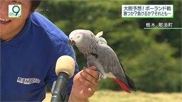 日本晉級有望 通靈鸚鵡預測戰波蘭將打平