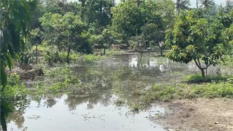 全台水情拉警報 大樹農田不缺水反被淹沒