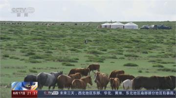 中國缺糧危機暫獲緩解? 蒙古九月捐贈1.5萬隻羊