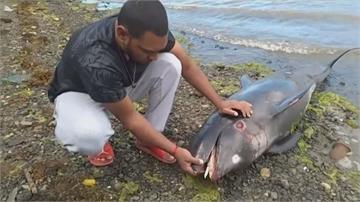 日貨輪觸礁燃油外洩  模里西斯現大量海豚暴斃