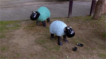 惡劣!少年破壞裝置藝術 綿羊慘遭斷耳