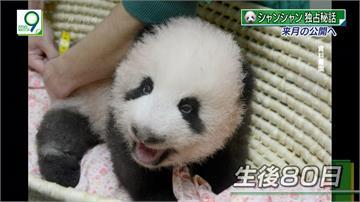 貓熊寶寶香香人氣夯 上野動物園「香粉」湧入
