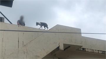 把狗丟屋頂虐待?主人澄清:牠喜歡高處