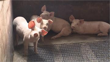 非洲豬瘟疫情蔓延 OIE警告:沒有國家能倖免