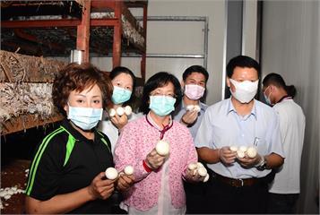 住冷氣房、引進產銷履歷 彰化竹塘種出「霸王洋菇」