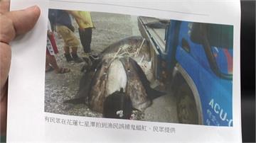 瀕危「鬼蝠魟」遭漁民捕殺?經調查僅為一般魟魚